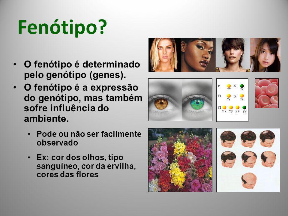 Fenótipo O fenótipo é determinado pelo genótipo (genes).