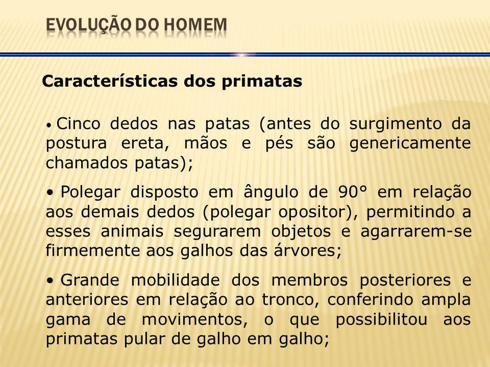 EVOLUÇÃO DO HOMEM Características dos primatas