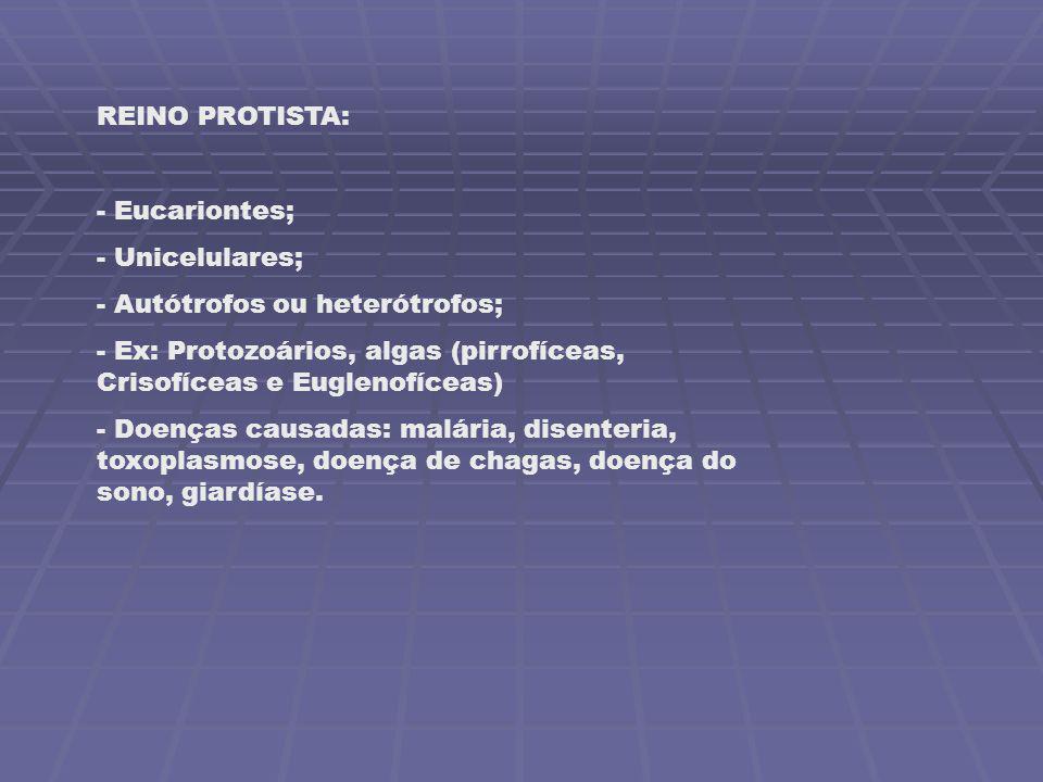 REINO PROTISTA: Eucariontes; Unicelulares; Autótrofos ou heterótrofos; Ex: Protozoários, algas (pirrofíceas, Crisofíceas e Euglenofíceas)