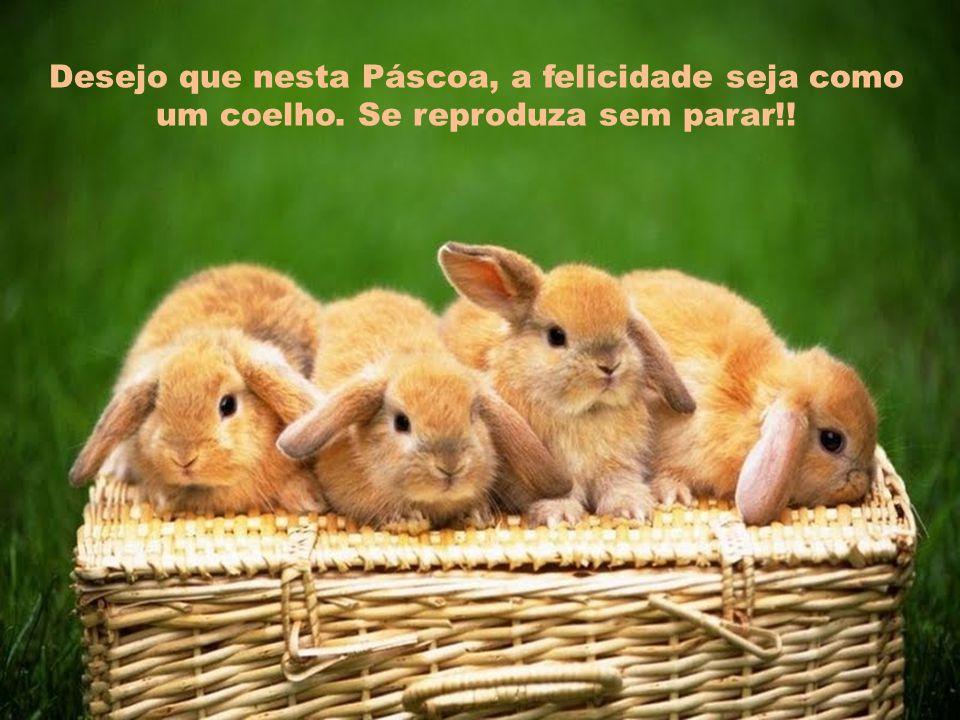 Desejo que nesta Páscoa, a felicidade seja como um coelho