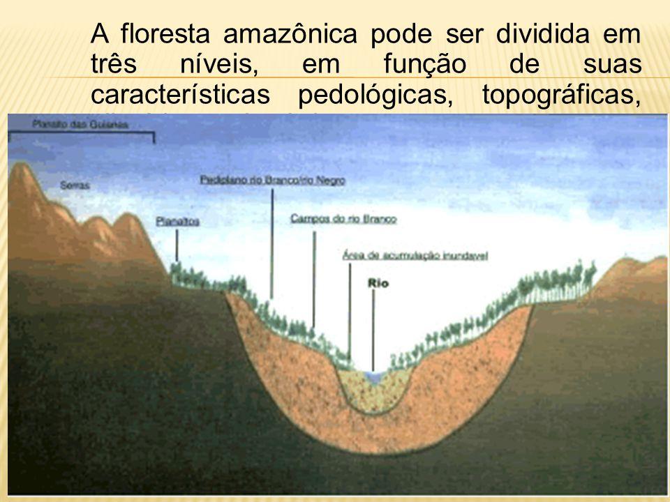 A floresta amazônica pode ser dividida em três níveis, em função de suas características pedológicas, topográficas, climáticas e botânicas.