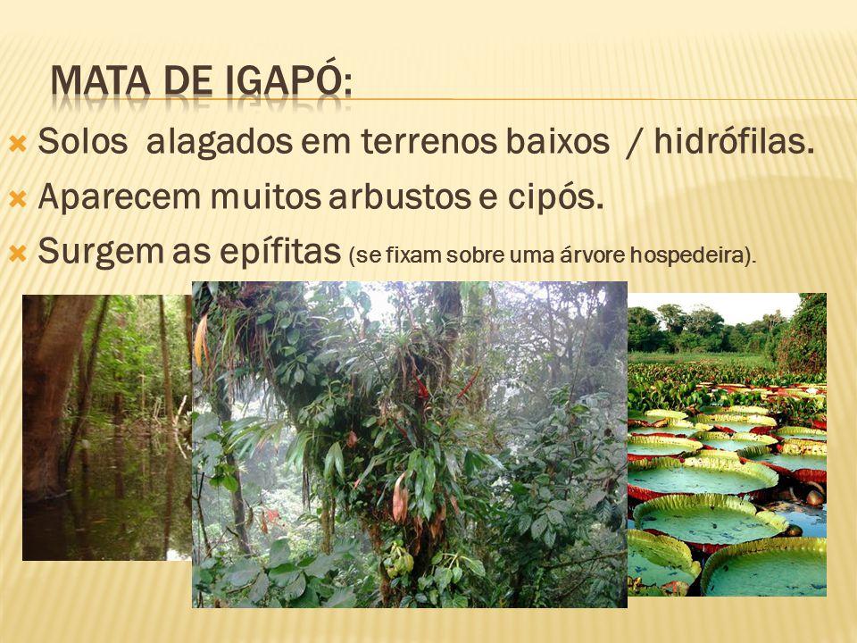 Mata de Igapó: Solos alagados em terrenos baixos / hidrófilas.