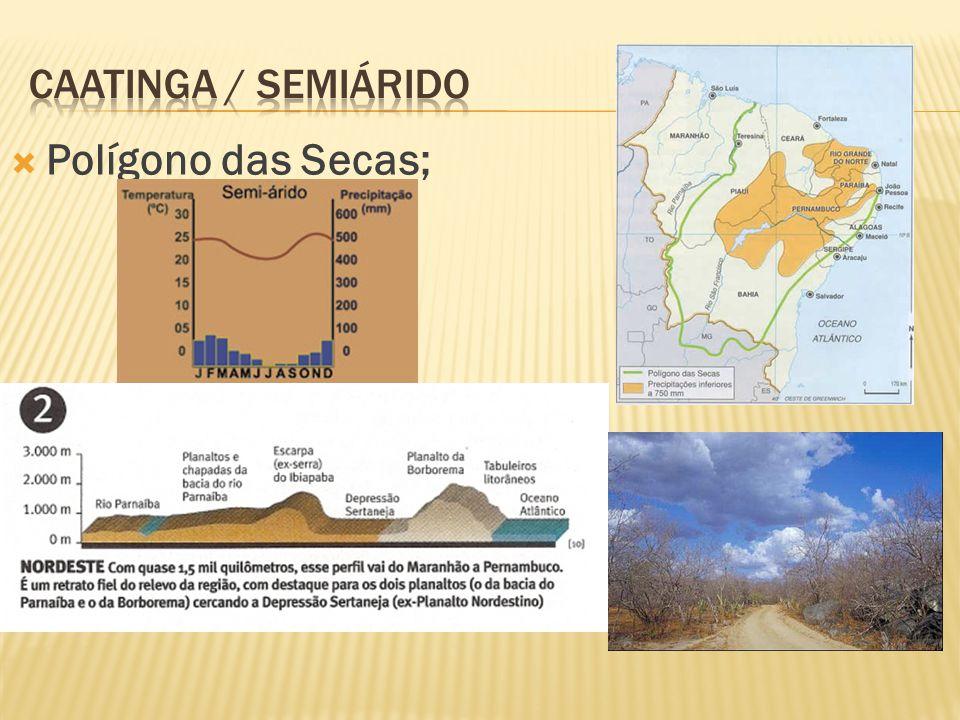 Caatinga / semiárido Polígono das Secas;