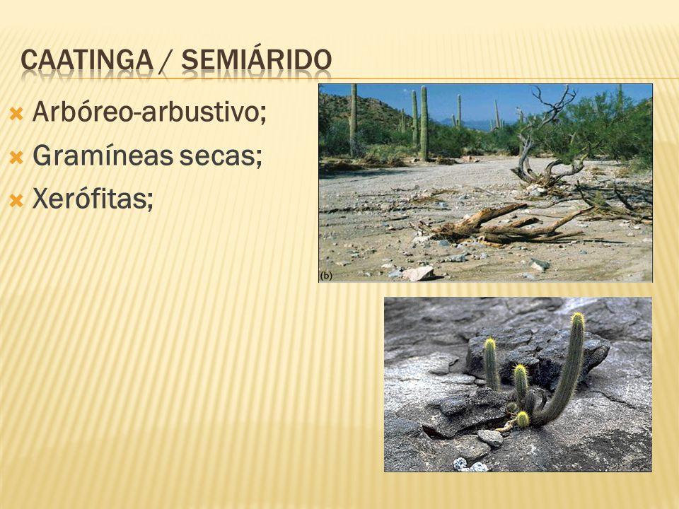 Caatinga / semiárido Arbóreo-arbustivo; Gramíneas secas; Xerófitas;