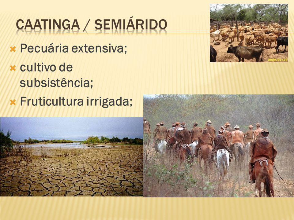 Caatinga / semiárido Pecuária extensiva; cultivo de subsistência;