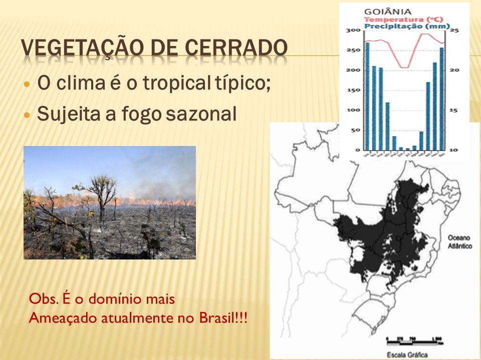 Vegetação de Cerrado O clima é o tropical típico;