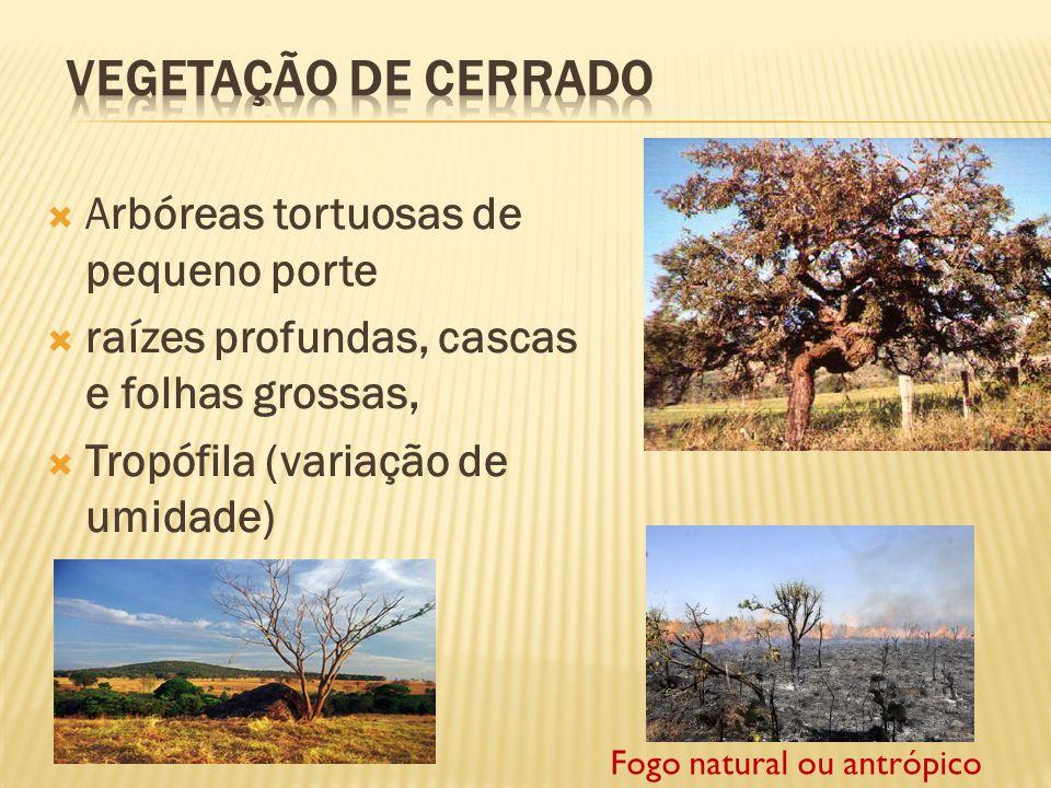 Vegetação de Cerrado Arbóreas tortuosas de pequeno porte