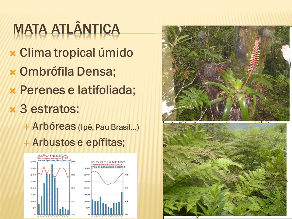 Mata atlântica Clima tropical úmido Ombrófila Densa;