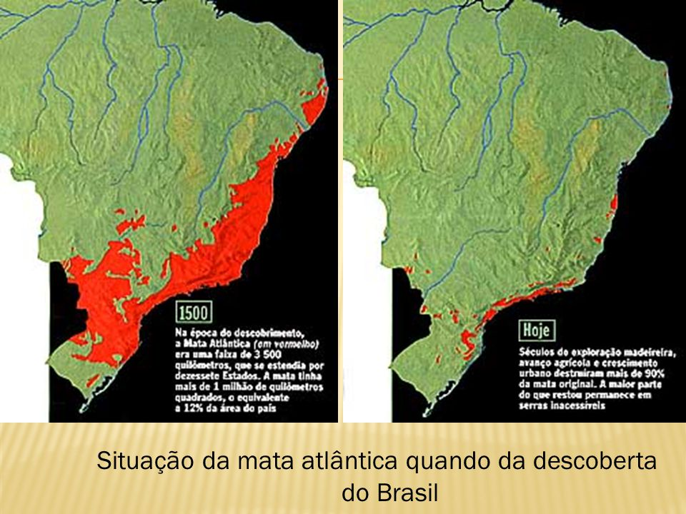 Situação da mata atlântica quando da descoberta do Brasil