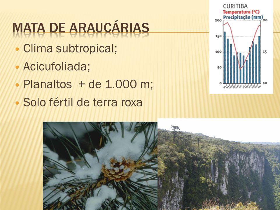Mata de Araucárias Clima subtropical; Acicufoliada;
