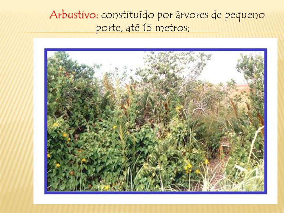 Arbustivo: constituído por árvores de pequeno porte, até 15 metros;