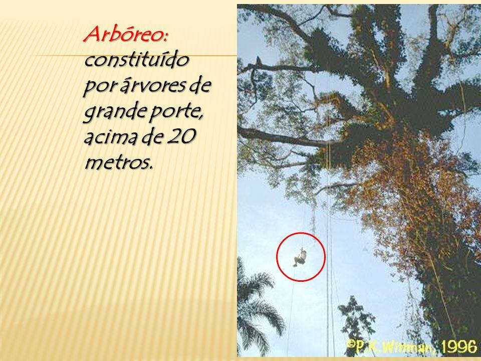 Arbóreo: constituído por árvores de grande porte, acima de 20 metros.
