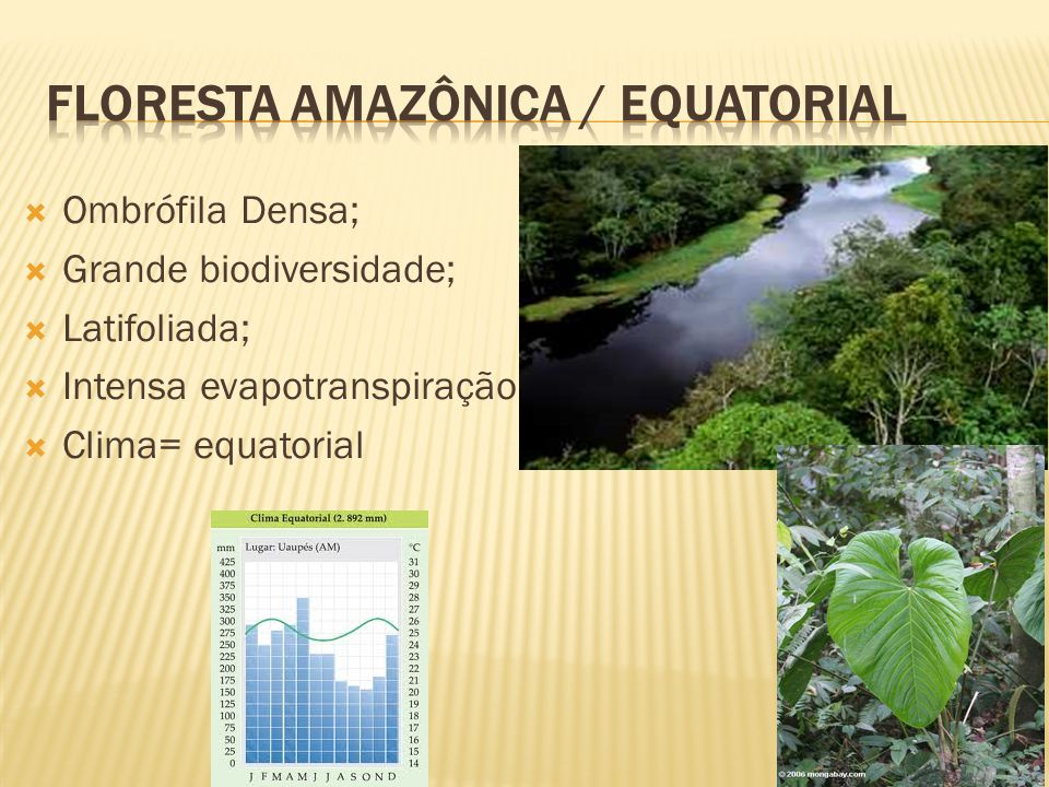 Floresta amazônica / equatorial