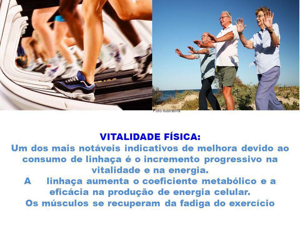 Os músculos se recuperam da fadiga do exercício
