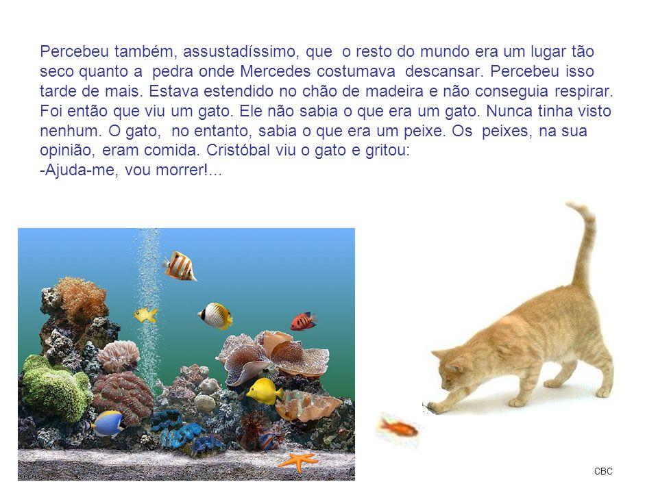 Percebeu também, assustadíssimo, que o resto do mundo era um lugar tão seco quanto a pedra onde Mercedes costumava descansar. Percebeu isso tarde de mais. Estava estendido no chão de madeira e não conseguia respirar. Foi então que viu um gato. Ele não sabia o que era um gato. Nunca tinha visto nenhum. O gato, no entanto, sabia o que era um peixe. Os peixes, na sua opinião, eram comida. Cristóbal viu o gato e gritou: -Ajuda-me, vou morrer!...