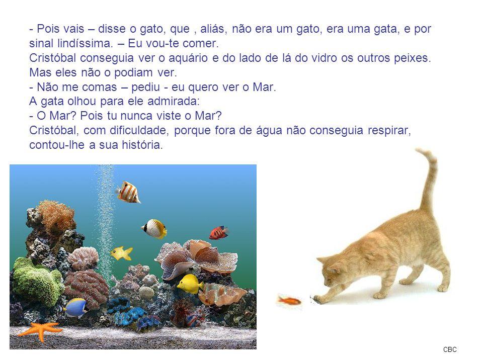 Pois vais – disse o gato, que , aliás, não era um gato, era uma gata, e por sinal lindíssima. – Eu vou-te comer. Cristóbal conseguia ver o aquário e do lado de lá do vidro os outros peixes. Mas eles não o podiam ver. - Não me comas – pediu - eu quero ver o Mar. A gata olhou para ele admirada: - O Mar Pois tu nunca viste o Mar Cristóbal, com dificuldade, porque fora de água não conseguia respirar, contou-lhe a sua história.