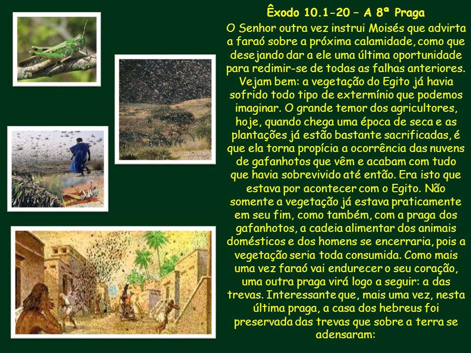 Êxodo 10.1-20 – A 8ª Praga
