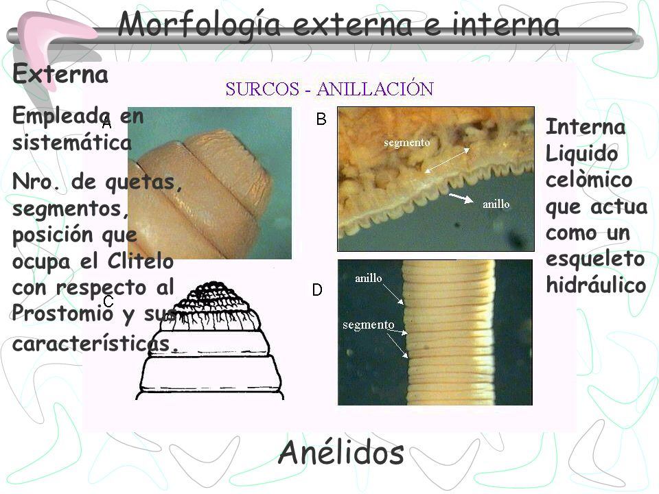 Morfología externa e interna