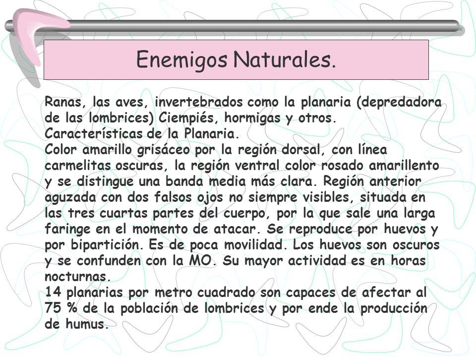 Enemigos Naturales. Ranas, las aves, invertebrados como la planaria (depredadora de las lombrices) Ciempiés, hormigas y otros.