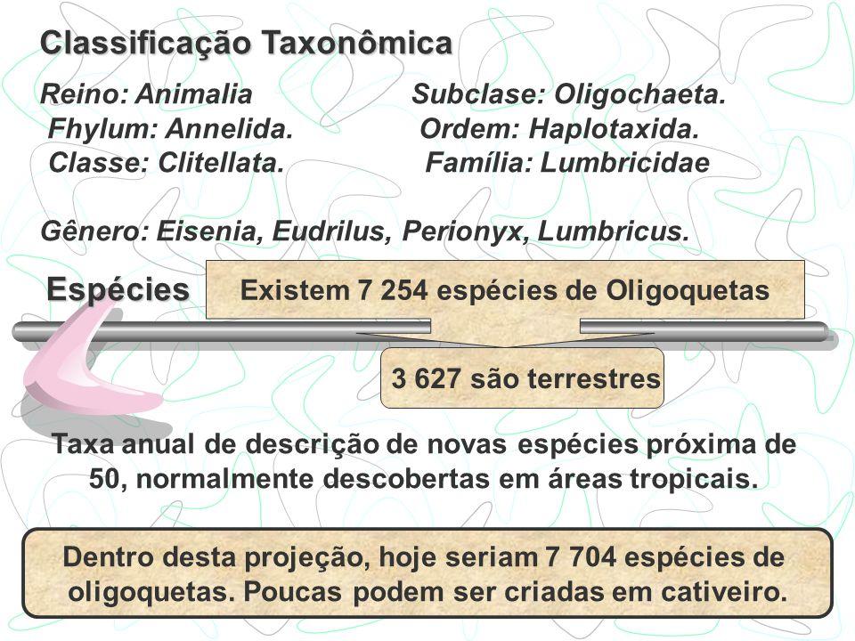 Existem 7 254 espécies de Oligoquetas