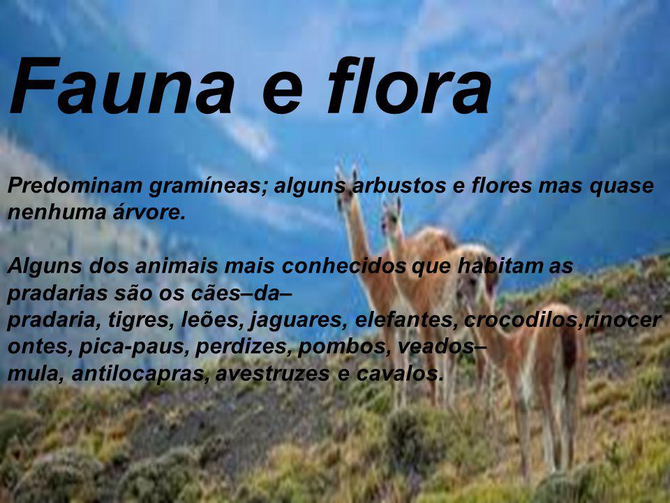 Fauna e flora Predominam gramíneas; alguns arbustos e flores mas quase nenhuma árvore.