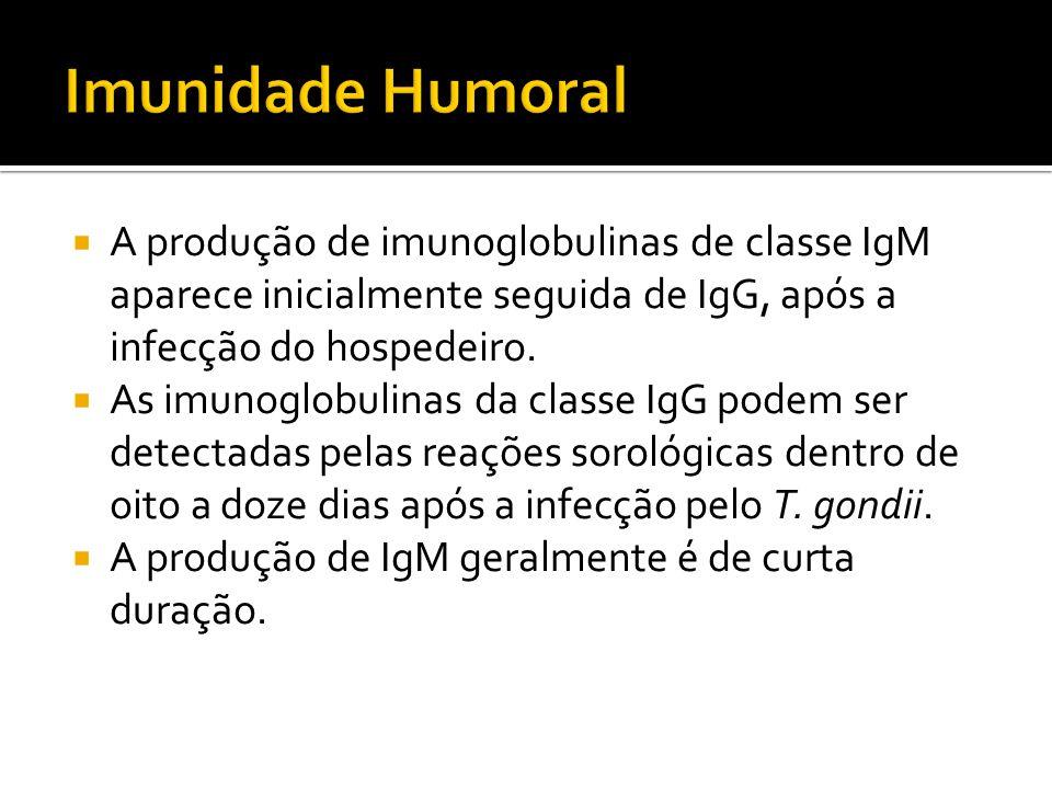 Imunidade Humoral A produção de imunoglobulinas de classe IgM aparece inicialmente seguida de IgG, após a infecção do hospedeiro.