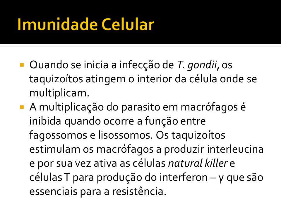 Imunidade Celular Quando se inicia a infecção de T. gondii, os taquizoítos atingem o interior da célula onde se multiplicam.