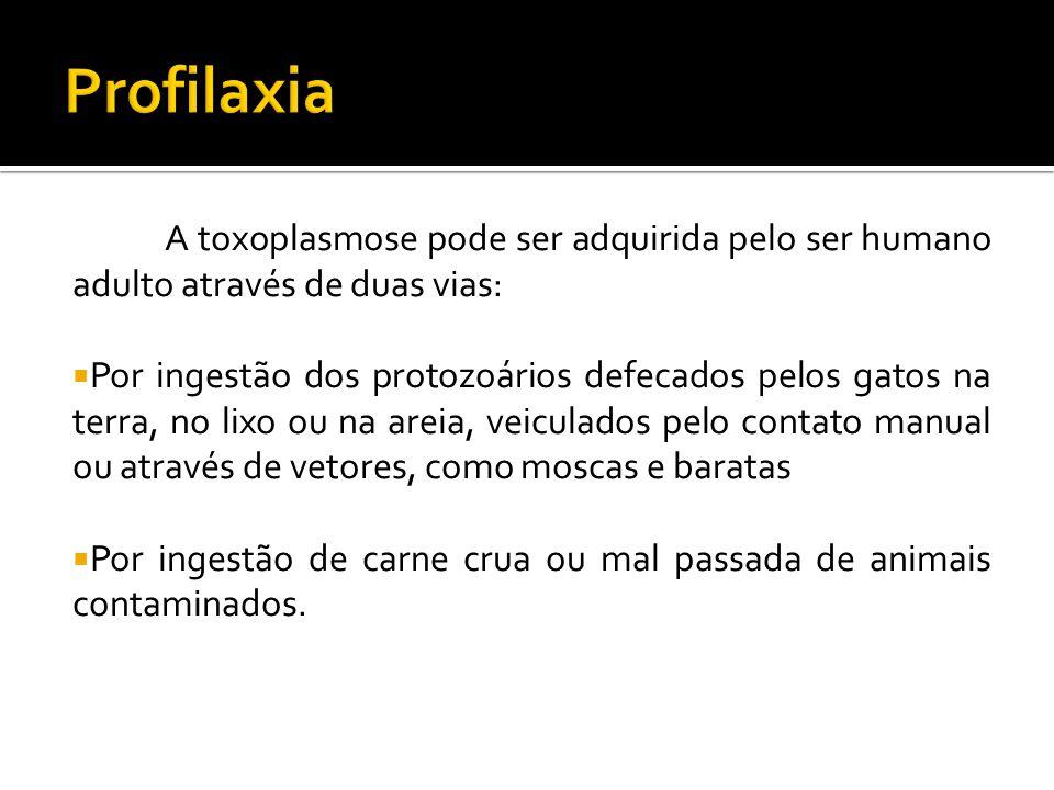 Profilaxia A toxoplasmose pode ser adquirida pelo ser humano adulto através de duas vias: