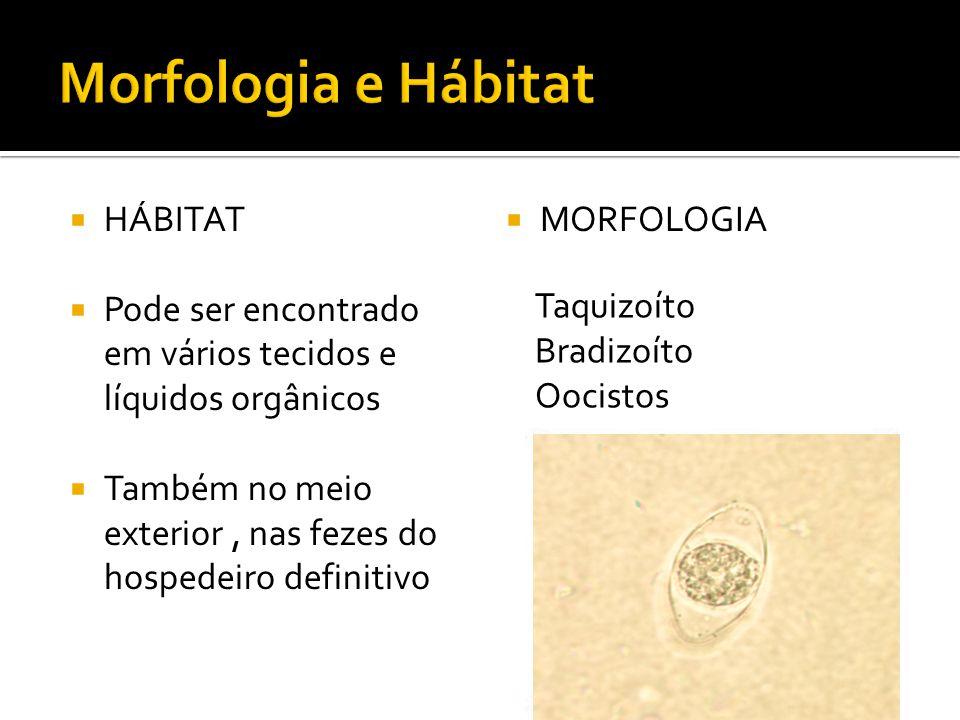 Morfologia e Hábitat HÁBITAT