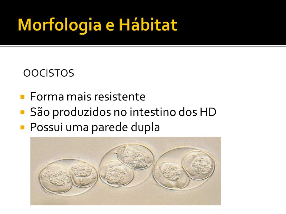 Morfologia e Hábitat Forma mais resistente