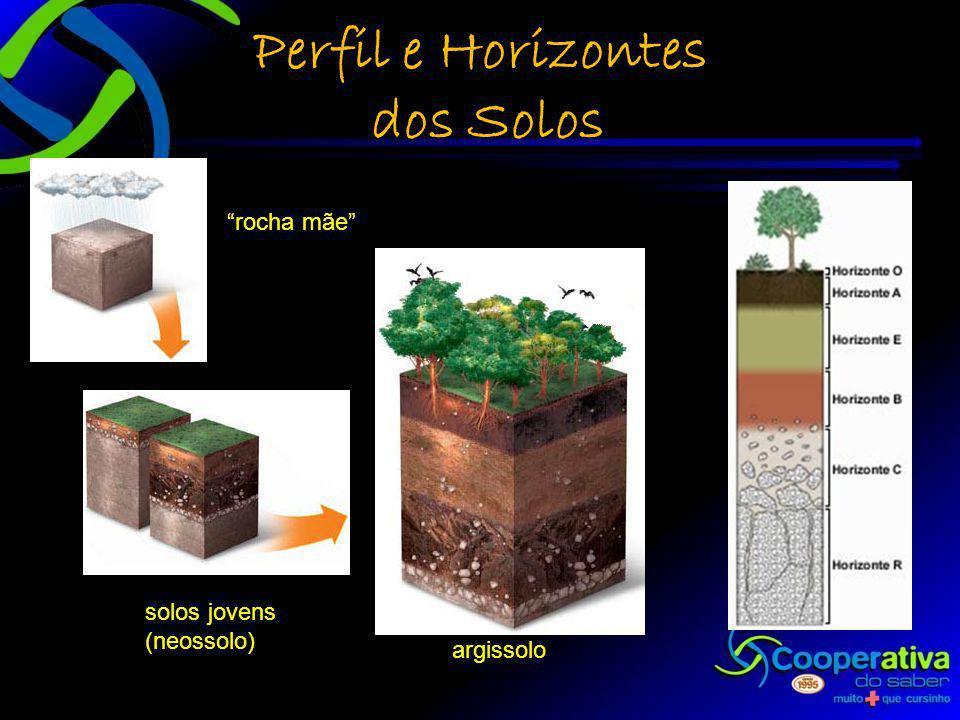 Perfil e Horizontes dos Solos