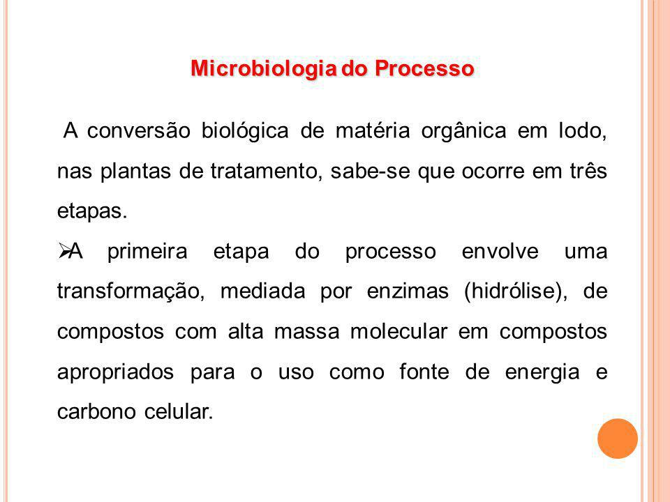 Microbiologia do Processo