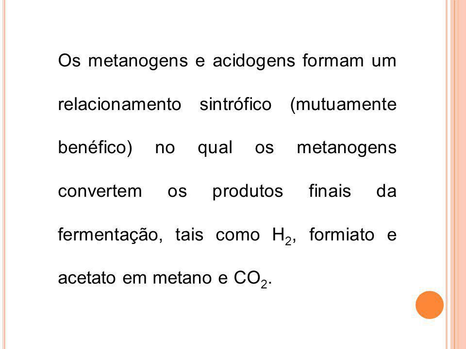 Os metanogens e acidogens formam um relacionamento sintrófico (mutuamente benéfico) no qual os metanogens convertem os produtos finais da fermentação, tais como H2, formiato e acetato em metano e CO2.