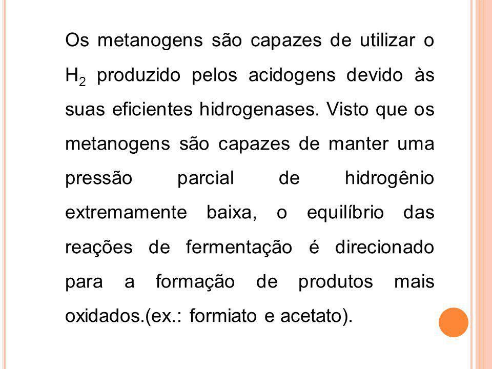 Os metanogens são capazes de utilizar o H2 produzido pelos acidogens devido às suas eficientes hidrogenases.