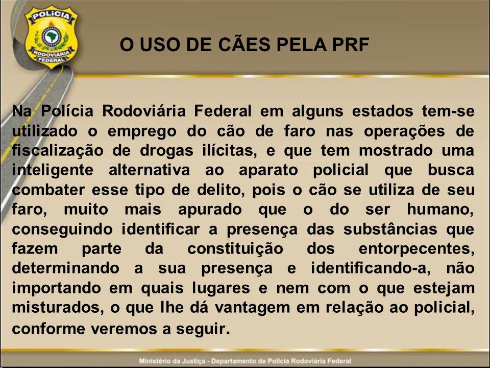 O USO DE CÃES PELA PRF