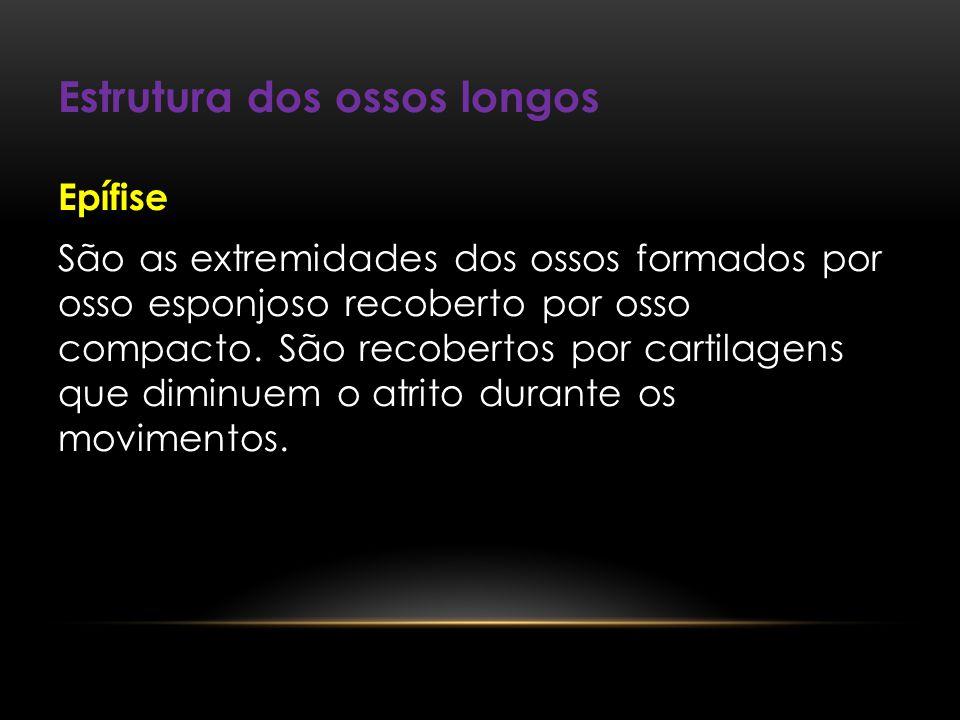 Estrutura dos ossos longos