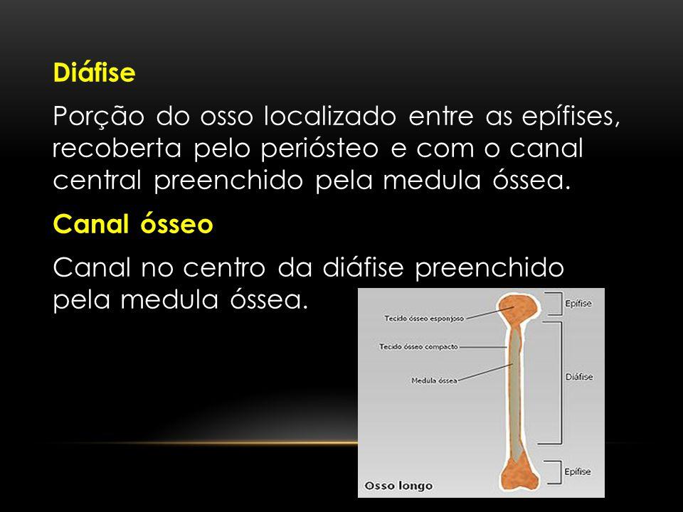 Diáfise Porção do osso localizado entre as epífises, recoberta pelo periósteo e com o canal central preenchido pela medula óssea.
