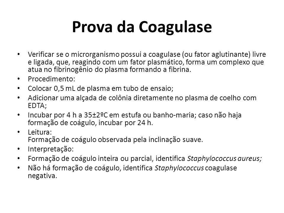 Prova da Coagulase