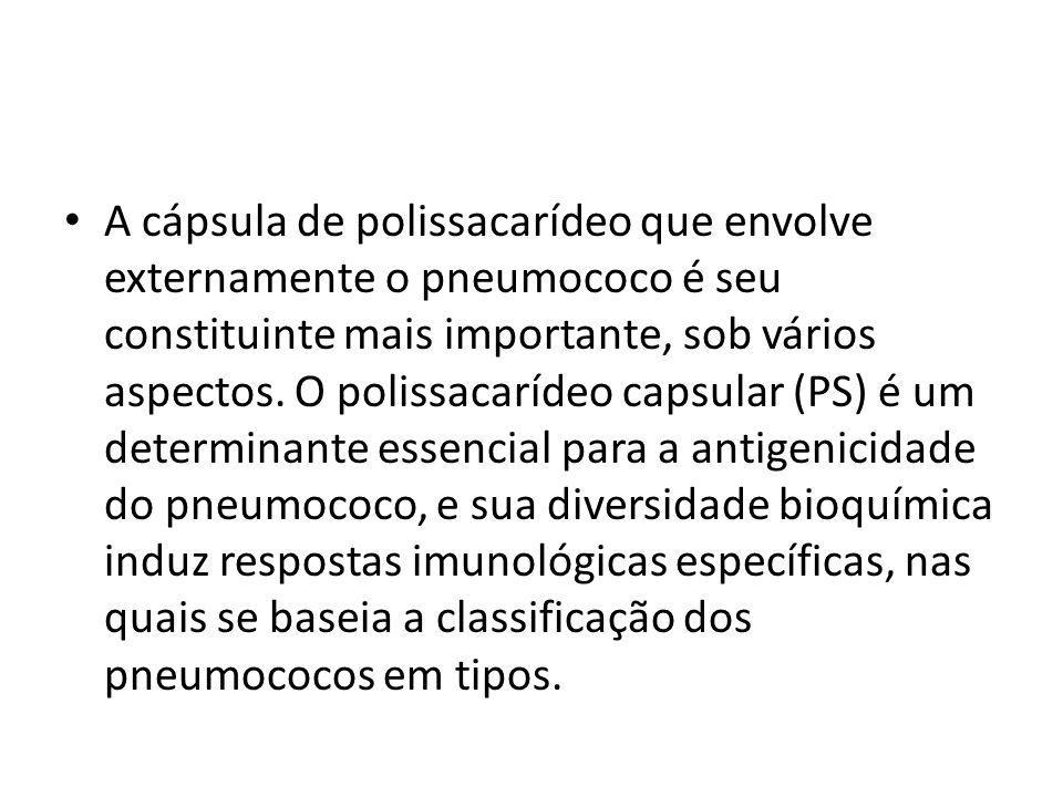 A cápsula de polissacarídeo que envolve externamente o pneumococo é seu constituinte mais importante, sob vários aspectos.