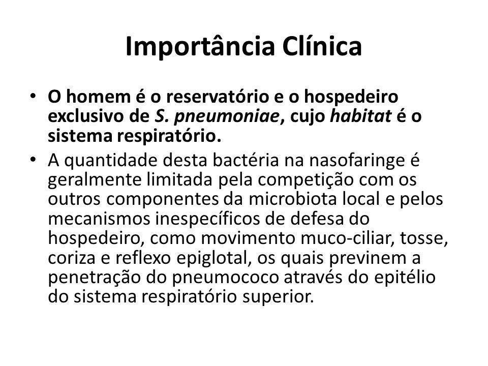 Importância Clínica O homem é o reservatório e o hospedeiro exclusivo de S. pneumoniae, cujo habitat é o sistema respiratório.