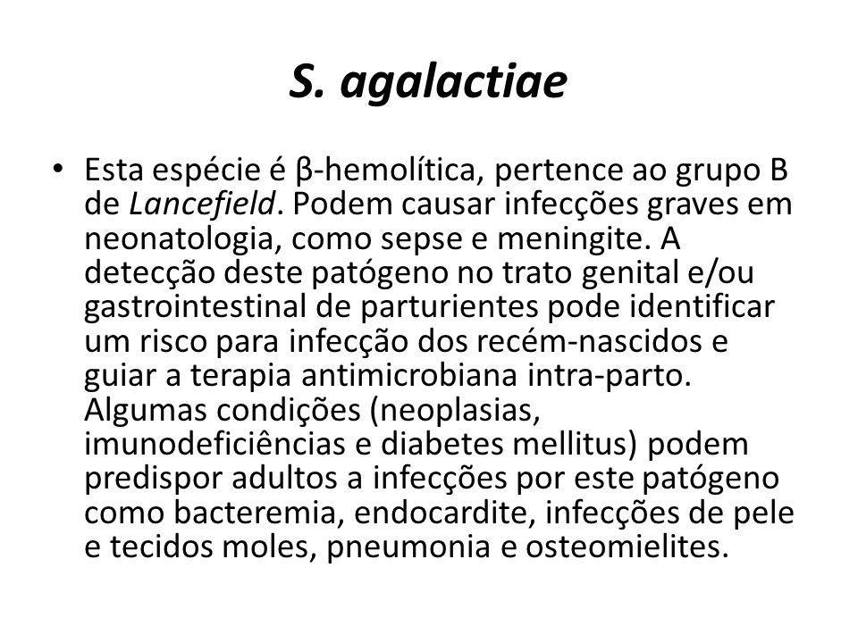 S. agalactiae