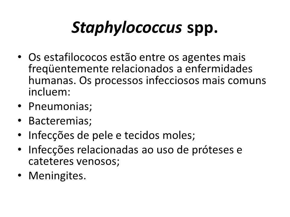 Staphylococcus spp.
