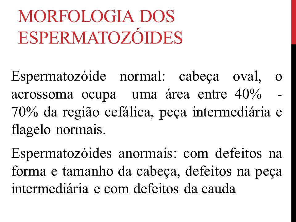 MORFOLOGIA DOS ESPERMATOZÓIDES