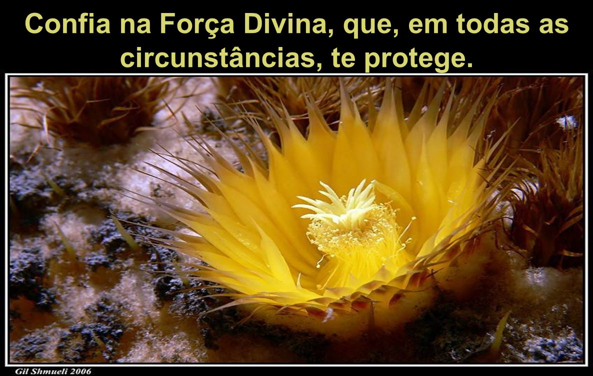 Confia na Força Divina, que, em todas as circunstâncias, te protege.