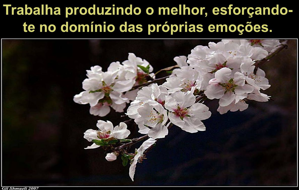 Trabalha produzindo o melhor, esforçando-te no domínio das próprias emoções.