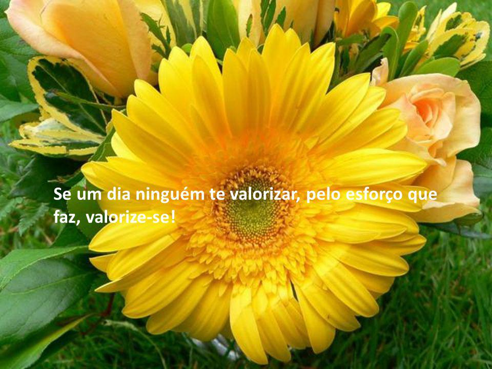 Se um dia ninguém te valorizar, pelo esforço que faz, valorize-se!