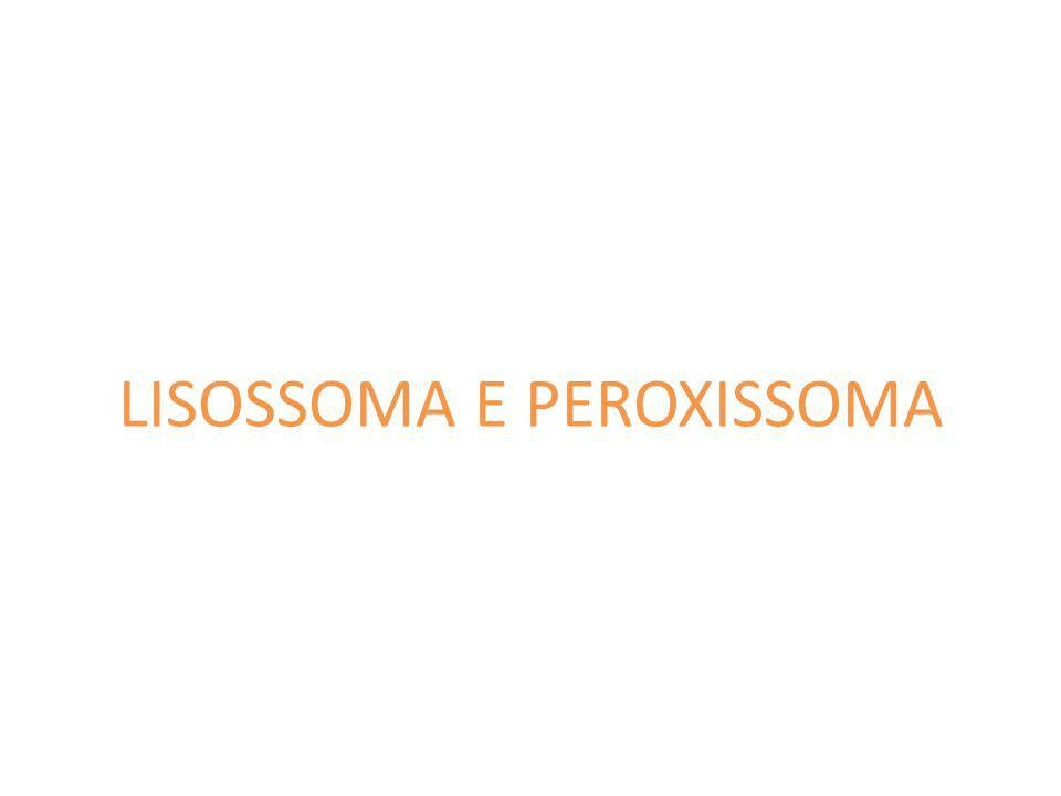LISOSSOMA E PEROXISSOMA
