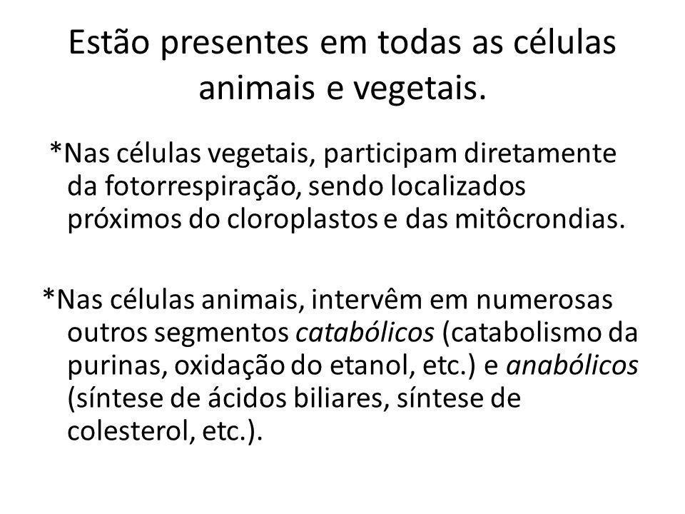 Estão presentes em todas as células animais e vegetais.