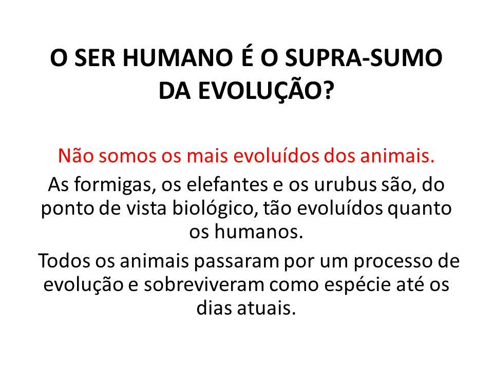 O SER HUMANO É O SUPRA-SUMO DA EVOLUÇÃO