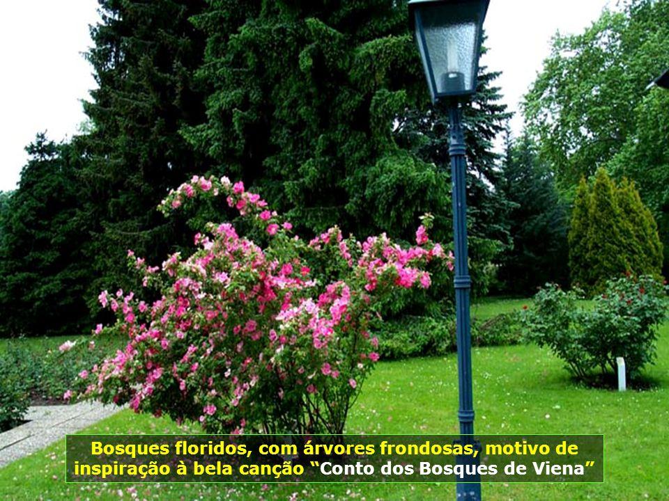 Bosques floridos, com árvores frondosas, motivo de inspiração à bela canção Conto dos Bosques de Viena